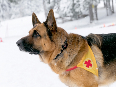 Rescue Dogs from All Over Bulgaria Are Now Equipped with Tracking Devices